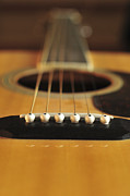 Terry DeLuco - Acoustic Guitar Color