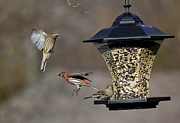 Douglas Stucky - Action At The Feeder