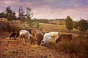 Mark Richards - Adelaide Hills Farmland...