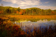 Fir Trees Prints - Adirondack Pond II Print by David Patterson