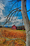 Emily Stauring - Adirondack Red