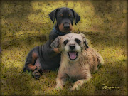 Puppies Digital Art - ADOPTION IS THE BEST ANSWER - Featured in Big Dogs and ABC Groups by EricaMaxine  Price