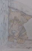 Portraits Drawings Metal Prints - Adorabile Pooch Metal Print by Melissa Nankervis