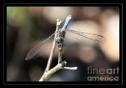 Dragonfly Eyes Framed Prints - Adorable Dragonfly with Border Framed Print by Carol Groenen