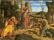 Shepherds Posters - Adoration of the Shepherds Poster by Andrea Mantegna