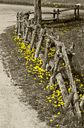 Split Rail Fence Prints - Adorned Split-Rail Print by Kathryn Whitaker