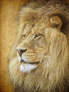 Steve McKinzie - Adult Male Lion