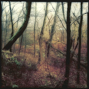 Wissahickon Photos - Adversity by Elena Bouvier