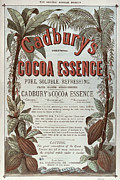 Food Drawings Metal Prints - Advertisement for Cadburs Cocoa Essence from the Graphic Metal Print by English School