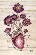 Illustration Pyrography Prints - Aeonium Heart Print by Fay Helfer