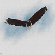 Roseann Caputo - Aerial Hunter