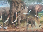 Elephants Drawings - Africa by Hakeem Naseer