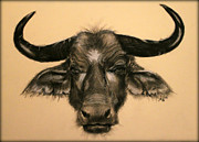 Michelle Wolff - African Buffalo