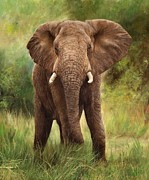 Lion Oil Paintings - African Elephant by David Stribbling