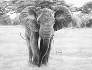 Ralph N Murray III - African Elephant drawing