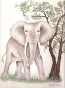 Grey Drawings Originals - African Elephant by Sharon Blanchard