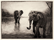 Sher Nasser - African Elephants at...