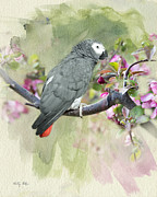 Tree Blossoms Digital Art Prints - African Gray Among the Blossoms Print by Betty LaRue