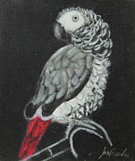 Pet Pastels - African Grey by Jeanne Fischer