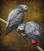 R christopher Vest - African Grey Parrots