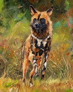 Wolves Painting Prints - African Painted Wild Dog  Print by David Stribbling