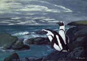 Tom Blodgett Jr - African Penguin