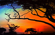 African Skies Print by Lydia Holly