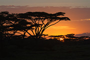 Christa Niederer Prints - African sunset Print by Christa Niederer