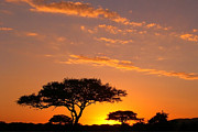 Red Sunsets Framed Prints - African Sunset Framed Print by Sebastian Musial