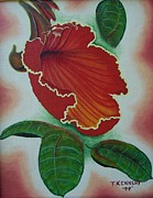 Thomas F Kennedy - African  Tulip Tree