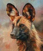 David Stribbling - African Wild Dog