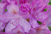 Flowers Photos - After the Rain by Aimee L Maher