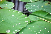 Nature  Photos - After the Rain by Sara Graham