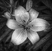Flower Art - After the Rain by Scott Norris