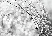 Netting Metal Prints - After The Rain Metal Print by Theresa Tahara
