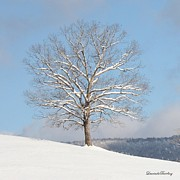 Bland County Posters - After the Snow  Poster by Laurinda Bowling