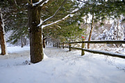 Kathy Jennings Photographs Photos - After The Snowfall by Kathy Jennings