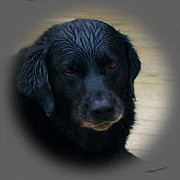 Black Lab Digital Art - After The Swim by Timothy Clinch