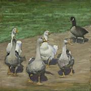 John  Reynolds - Afternoon Geese Walk