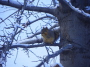 Squirrel Mixed Media - Afternoon Snack - Squirrel on Break by Photography Moments - Sandi