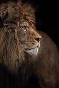 Dignified Prints - Against All Odds Print by Ashley Vincent