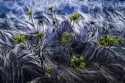Cornfield Photos - Against The Wind by Joachim G Pinkawa
