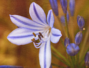 Agapanthus Metal Prints - Agapanthus in Painting Metal Print by Irina Wardas