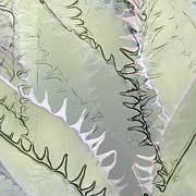 Agave Abstract Print by Ben and Raisa Gertsberg