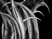 Bryant Digital Art Metal Prints - Agave Metal Print by Brenda Bryant