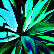 Nectar Prints - Agave - High Contrast Art By Sharon Cummings Print by Sharon Cummings