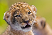 Youthful Photo Prints - Age of Innocence Print by Ashley Vincent