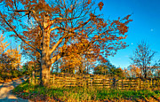 Split Rail Fence Photo Metal Prints - Aged Beauty 2 Metal Print by Steve Harrington
