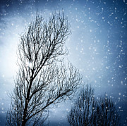 Snowy Night Night Photo Prints - Aged tree in winter Print by Anna Omelchenko
