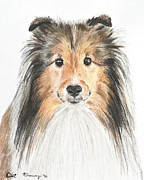 White Pastels Metal Prints - Agility Dog Sheltie in Pastel Metal Print by Kate Sumners